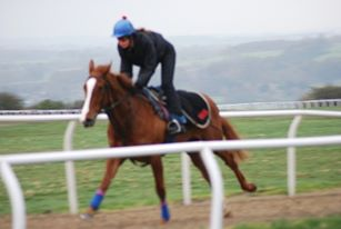 Me on one of many racehorses over the last 16 year
